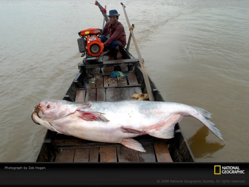 mekong-catfish-boatjpg-sw