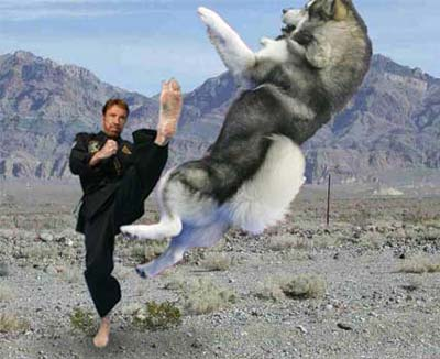 http://mountaincatgeology.files.wordpress.com/2009/04/fark_chuck_norris_dog.jpg